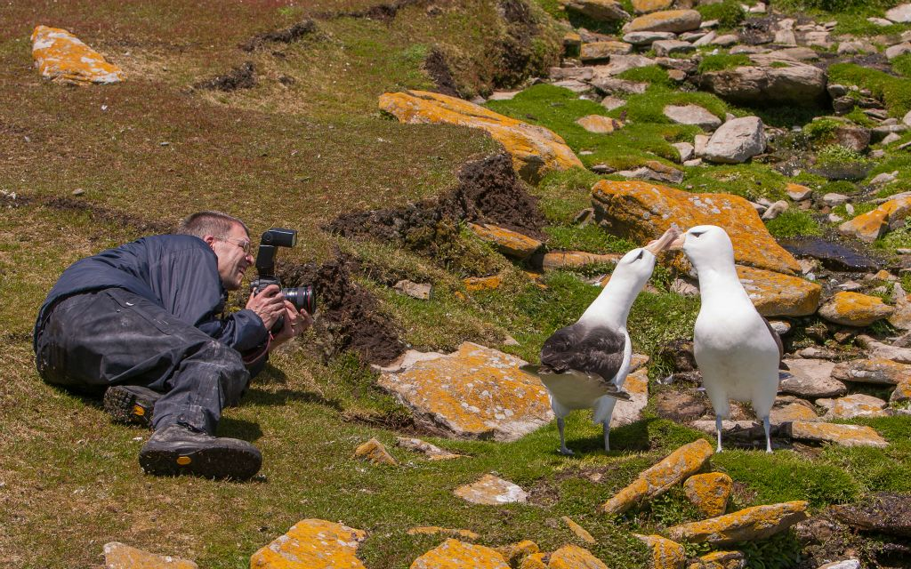 Photographer and Albatross