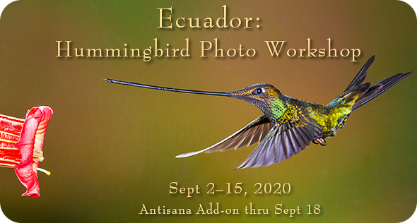 Ecuador Hummingbirds - click for more info