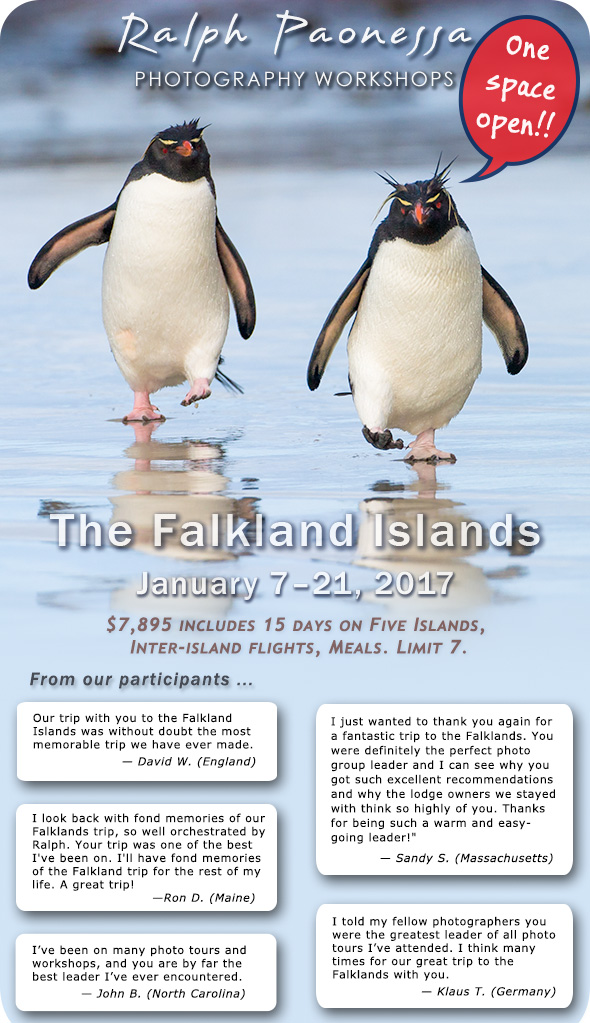 The Falkland Islands - click for more info